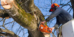 A Cost Guide for Availing Professional Tree Services