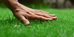 Eight Tips to Keep Your Lawn Lush Green This Summer 2021