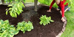 How to Improve Your Lawn by Mulching